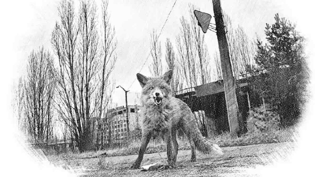 The Chernobyl Exclusion Zone is a UNESCO World Heritage Site